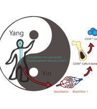 CD34+ cell count Tai Chi study-6